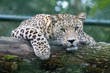 """""""Beware of the leopard"""": finding a way through the UK Visa informationlabyrinth"""